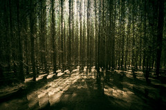 Fractured Light (Andrew_Dempster) Tags: sa incameramultipleexposure forestry cudleecreek forest australia trees multipleexposure southaustralia light