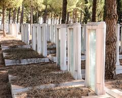 Graves (Allison Mickel) Tags: nikon d7000 adobe lightroom edited turkey gallipoli history museum war wwi battle monument memorial cemetery