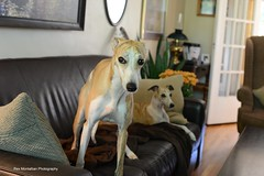 Toby and Reid (Rex Montalban Photography) Tags: tobyisone rexmontalbanphotography dog whippet