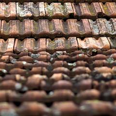 Frankfurter Pfanne (HORB-52) Tags: berndsontheimer badenwrttemberg blackforest dach dachziegel frankfurterpfanne feldscheune ziegel