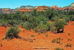 scrub (BehindBlueEyes) Tags: az sedona arizona redrocks nature