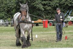 IMG_7706 (Snapshot(wo)man) Tags: rockanje powerhorse trekpaarden