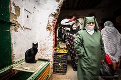 Tanger, Morocco (roeyamr) Tags: africa arab arabic boy cat islam kingdom maghreb maroc moroccan morocco muslim narrow old orient street tanger tangier tourism tourist touristic travel woman tetouan tangiertetouan
