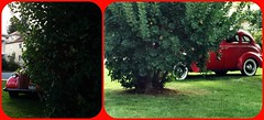CAR PEEKS OUT FROM BOTH ENDS (Visual Images1) Tags: diptych car vintage two bush green