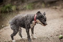 (sismastery) Tags: canon 6d canon6d 135mm f2l 135mmf2l dog water