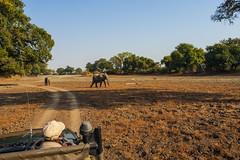 Zambia_LionCamp_213_elephant (atkiteach) Tags: zambia southluangwanationalpark southluangwa safari safaricamp camp nature naturereserve holiday rural africa lioncamp elephant elephants elephantcalf calf