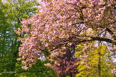 Bad Homburg (tina djebel) Tags: badhomburg nikon d7000 dslr natur bume baum tree trees park nikkor
