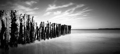 In the water (Matthieu Manigold) Tags: bois tronc wood water mer sea monochrome bw black longexposure white saintmalo noiretblanc nikon nature light