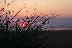 grasssunrise (EWisePhoto) Tags: virginabeach virginia sunrise beachsunrise
