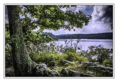 Tree by Bear Mountain Lake (jsleighton) Tags: tree rocks lake bearmountain roots leaves sky landscape