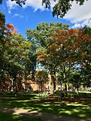 Harvard Yard Fall Foliage ((Jessica)) Tags: newengland pw boston harvard fallfoliage harvardyard massachusetts foliage trees cambridge