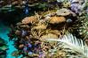 Ambiente tropicale 2 - Oceanario Lisbona (antoniosimula) Tags: oceanario lisbon lisbona lisboa portogallo portugal area expo fish flora fauna nikon d3200 35mm 70300 tamaron ocean species pacific atlantic indian