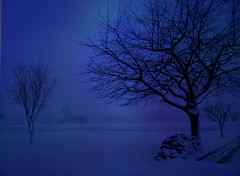 DSCN6016 blue evening (pinktigger) Tags: blue winter italy snow tree landscape evening italia friuli fagagna feagne