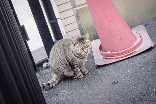 Today's Cat@2013-02-16