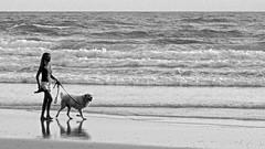 Dawn walkers, North Burleigh Beach (Andy Burton Oz) Tags: sea people blackandwhite bw woman dog beach sunrise dawn sand waves time personal miami australia pacificocean qld queensland goldcoast walkingthedog southpacificocean southeastqueensland 2013 afsvrmicronikkor105mmf28gifed photospecs stockcategories andyburton nikond7000 northburleighbeach aperture343