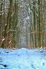 Layon (Phil du Valois) Tags: landscape hiver neige paysage sentier chemin fort villers laie retz layon cotterts allz
