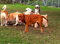 Aprender a compartir (Dogs Resort Pereira) Tags: hotel perros petit guardera hotelparamascotas perrosequilibrados dogsresort paseosperros guarderaparaperros
