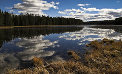 All is quiet, all is still (CNorthExplores) Tags: park travel autumn trees sky usa lake reflection water clouds canon still swan day quiet cloudy grand national wyoming teton g11 explored