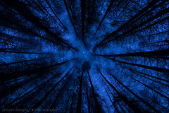The Big Blue Yonder (Dylan Arnallt) Tags: blue trees silhouette night forest canon dark stars star still branches wideangle nighttime stellar midnight nightsky 1022mm twinkling skyatnight convergingverticals 60d dylanarnold