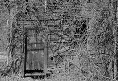 Enthralled (s1n3str0) Tags: door abandoned window overgrown barn vines shed infrared shack