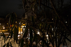 nightshot (KLAVIeNERI) Tags: snow plant church photographer nightshot balcony streetshots illuminated dusseldorf x1 bilk plantleaves mingthein winterinthecity leicaforum thorstenovergaard stevehuff leicax1 leicaimages lightroom4 ilovemyleica photographersontumblr