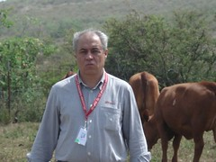 "SAINT CROIX - CARIBE - Convenção Mundial da Raça 2009  (41) • <a style=""font-size:0.8em;"" href=""http://www.flickr.com/photos/92263103@N05/8568404013/"" target=""_blank"">View on Flickr</a>"