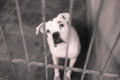 Memrias do Crcere (rodgertimm) Tags: dog pet cute animal cao cachorro jail fotografia rs rodger timm priso encantado cemin
