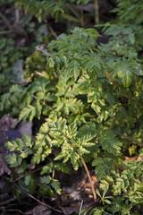 DSC_0680 (dan-morris) Tags: wood sunset white black tree green wet field grass forest photo leaf moss spring nikon shoot berries bokeh bark dew 1855mm dslr depth vr damp f3556g 1855mmf3556gvr d3100