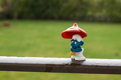 83/365/2013 - Moi, j'aime pas la pluie! (Lylise) Tags: blue mushroom wet rain azul boneco doll little chuva pluie bleu tiny smurf cogumelo champignon petit molhado schtroumpf mouill pleuvoir rainning chover project365 projet365