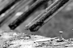 All Good Orchids Go To Heaven (Burnt Umber) Tags: fern vine entwined digital leaves dried old winter pentax k5 tamronsp24135 hattiebauerhammockpreserve abandoned rotten forgotten greenhouse potting shed fennellsorchidjungle redland florida ©allrightsreserved rpilla001 black white blanco negra