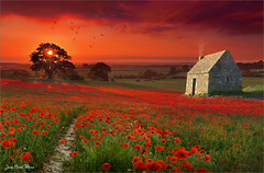 Red carpet (Jean-Michel Priaux) Tags: flowers sunset red sky sun color nature field clouds way spectacular landscape rouge meadow pasture poppy poppies prairie paysage chemin lande lapetitemaisondanslaprairie priaux natureplus photosandcalendar worldwidelandscapes panoramafotogrfico mygearandme flickrsportal rememberthatmomentlevel1