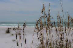 Sea Grass On Siesta Key (BHawk Photography) Tags: beach whitesand seagrass siestakey nikond7000