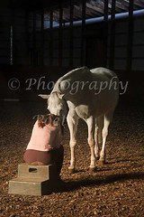 """""""Reassurance"""" (Photography Poet) Tags: horse white blanco caballo cheval grey gris bay emotion affection grau bahia feeling weiss blanc pferd equine baie gr hst affect vit braune"""