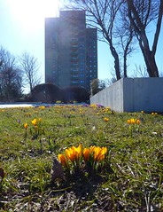 spring 2013.1 (joe.laut) Tags: architecture lumix spring plattenbau april kiel hochhaus growingthings schilksee 2013 joelaut