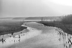 The Lake In Rain (Kansas Poetry (Patrick)) Tags: kansas clintonlake patrickemerson silverefexpro patricknancypetdogs