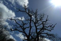 Bare Tree (eskayfoto (aka Nomis.)) Tags: blue shadow cloud sun tree sunshine silhouette clouds lumix branch village cheshire cloudy bare branches panasonic edge flare limbs baretree alderleyedge alderley lx3