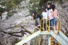Rush Hour (Nishi Drew) Tags: color japan canon cherry spring blossoms april  sakura