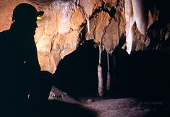 Club stalactites in Lilburn Cave (Chief Bwana) Tags: ca 35mm sierra cave nationalparks sequoia sequoianationalpark speleothems limestonecave lilburncave psa104 chiefbwana