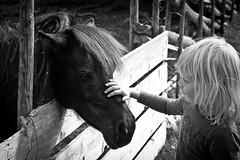 Magic moment (estenvik) Tags: trust tillit jente girl 2016 august eggemuseum erikstenvik estenvik sommer blackandwhite hest horse ponni pony child pole fence gjerde skigard barn unge