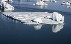 Un ours en mauvaise posture...(a bear in trouble) (Larch) Tags: islande iceland jokulsarlon iceberg ours bear nature eau water bleu blue blanc white reflet reflection réchauffement réchauffementclimatique globalwarming warming glace ice lacglaciaire lac glacierlake lake