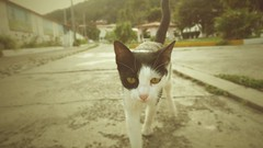 Gato hotelero (Jos2033) Tags: cat gato watching eyes white black green hotel observador ojos verdes blanco negro