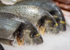 Fish (Hans van der Boom) Tags: europe portugal algarve vacation holiday albufeira animal food dead fish market closeup dof pt