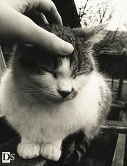 Care (Danny 666) Tags: care cat mycat kitten