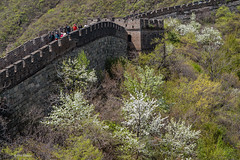 Springtime blossoms along the Great Wall of China (Phil Marion (50 million views - thanks)) Tags: philmarion 5photosaday beauty beautiful travel vacation candid beach woman girl boy wedding people explore  schlampe      desnudo  nackt nu teen     nudo   kha thn   malibog    hijab nijab burqa telanjang  canon  tranny  explored nude naked sexy  saloupe  chubby young nubile slim plump sex nipples ass hot xxx boobs dick dink