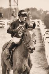 201608-21 (16)-3  r7 over and the horses returned to the paddock - Jevian Toledo rode #1 Rollin Warrior (JLeeFleenor) Tags: photos photography md maryland marylandracing marylandhorseracing jockey   jinete  dokej jocheu  jquei okej kilparatsastaja rennreiter fantino    jokey ngi horses thoroughbreds equine equestrian cheval cavalo cavallo cavall caballo pferd paard perd hevonen hest hestur cal kon konj beygir capall ceffyl cuddy yarraman faras alogo soos kuda uma pfeerd koin    hst     ko  laurelpark sepia monochrome