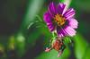 _DSC0238-Modifier.jpg (xpressx) Tags: bokeh 50mm nikon flowers passionphotonikon fleurs nd4 18 parc photographe lightroom nikond5000 nd8 nikkor flore d5000