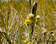DSC_0111 (tmcnealy576) Tags: daniels park fall weeds