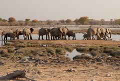 Namibia 2016 (342 of 486) (Joanne Goldby) Tags: africa africanelephant august2016 elephant elephants etosha etoshanationalpark explore loxodonta namiblodgesafari namibia safari