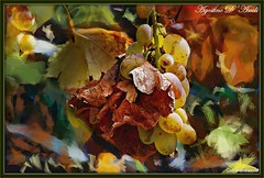 Uva... tempo di vendemmia - Agosto-2016 (agostinodascoli) Tags: uva agosto frutti piante texture nikon nikkor cianciana sicilia nature macro colore fullcolor photoshop photopainting digitalpainting