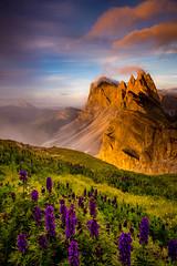 """Colore di Italia"" (Dan Ballard Photography) Tags: dolomites italy sunset wildflowers travel photography pro gallery"